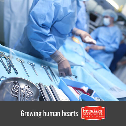 How Scientists Are Growing Human Hearts in Laboratories in Albuquerque, NM